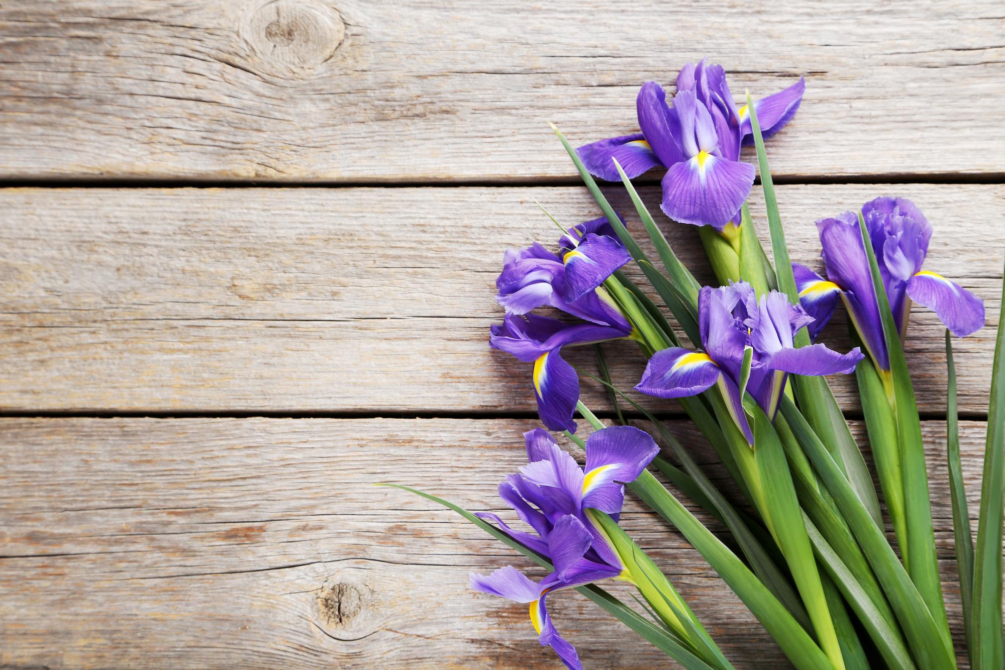 Bouquet Of Iris Flowers On Grey Wooden Table Tamara Raphaeli
